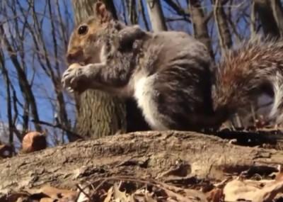 小松鼠一般不会咬人。(资料照片)