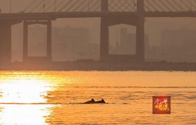 在放大后,可以看见海豚的背鳍。