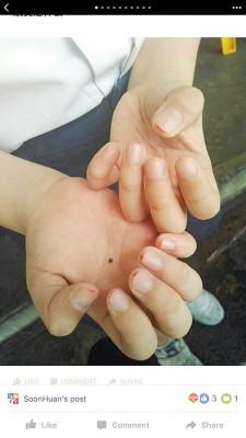 6月,有家人在脸书上帖文指孩子双手指甲被剪至流血。