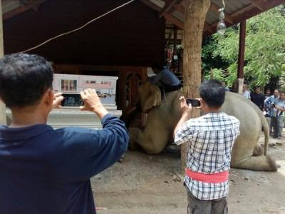 大象在灵堂前下跪,主人的儿子赶紧跳上象背加以安抚。