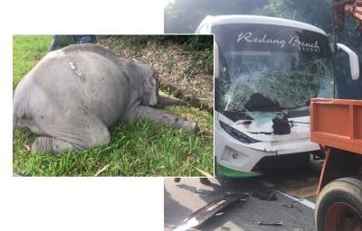 大象被长巴撞后倒毙在大道旁。