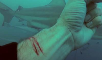 托马斯在充满鲨鱼的水中割伤自己。