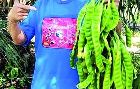 来自威北平安村的黄秋明就像亲手培育孩子般努力培育臭豆,盼臭豆树遍地花开。