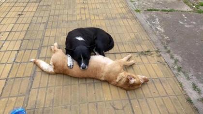 好难过!狗狗被车撞死 狗友伴尸不离去