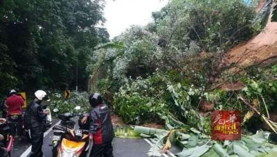 从湖内通往浮罗山背的新路中段,因有树木倒下,导致交通阻塞。