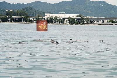 多头载浮载沉,互相追逐,欢腾跳跃的海豚,吸引众人目光。
