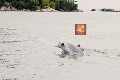 """一头跳出水面的海豚,""""迎接""""李淑玲到来。"""