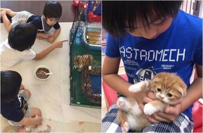 Kimi大庆林志颖送摺耳猫,此举却吸引热议。
