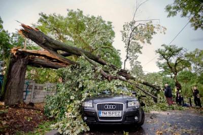 风暴中大树倾倒。