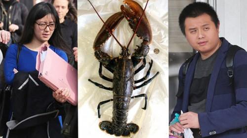 李智雄及李妮将600多只螃蟹与龙虾安排放生至英伦海峡。