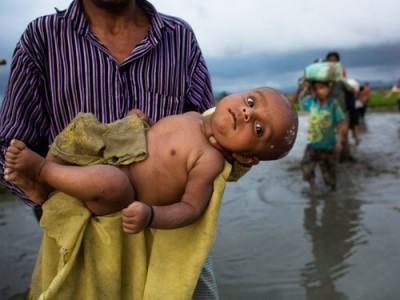 罗兴亚人抱着婴儿,在稻田中涉水逃往孟加拉。