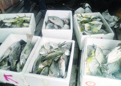 有渔民趁机发财,在养鱼场附近捞捕漏网之鱼群。