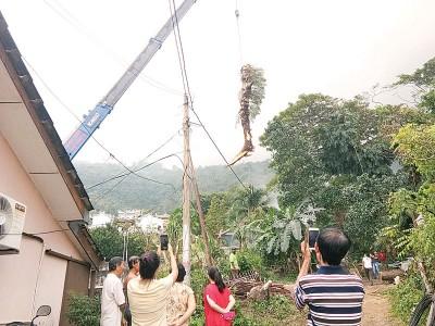 行动党亚逸布爹选区服务中心出动起重机将压在屋子范围的树干、树枝逐步移除。