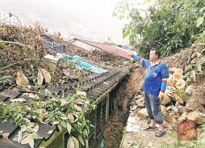 吴国明指出在大水灾隔天,有两棵树木倒塌压在屋梁上,惟已请人来锯树。