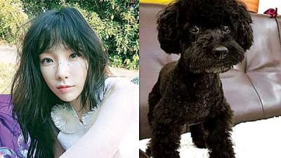 太妍发生车祸时,有目击者指出她的爱犬也在车上,且未系安全带。