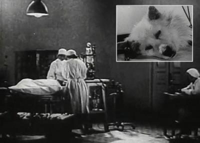 科学家以断开的狗头(小图)进行实验。