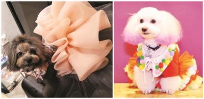 穿着精致小礼服的Betty和造型色彩特出的Baby双双齐摘得最佳造型奖殊荣。