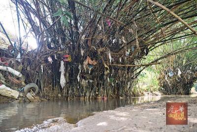 """垃圾悬挂在竹丛上,犹如""""许愿树""""。"""