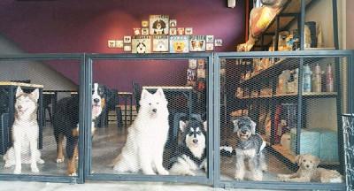 根据卫生部最新指令,宠物咖啡厅业者须分开宠物区及用餐区。(摘自JDog House&Cafe脸书专页)