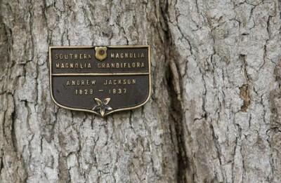 即棵树是美国第7不管总统杰克逊吗纪念亡妻蕾切尔所种。