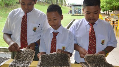 3名中一学生示出粘满苍蝇的苍蝇贴纸。