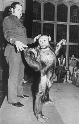 Oliver能够直立行走,与其他黑猩猩不同。