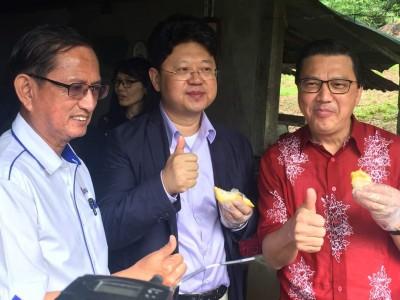 初到文冬就来品尝当地有名的猫山王榴莲,白天(中)声声赞好。右为马华总会长廖中莱,左为马华彭亨州主席何启文上议员。