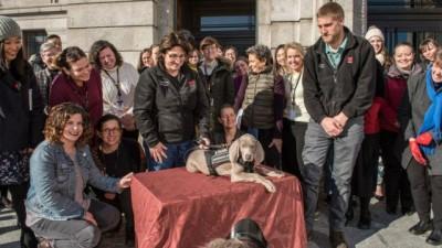 美国波士顿美术馆又再找到一项狗儿的新任务,用鼻子嗅出害虫拯救艺术品。