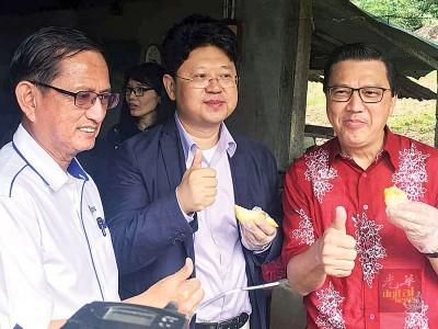 初到文冬就来品尝当地有名的猫山王榴梿,白天(中)声声赞好。右为马华总会长廖中莱,左为马华彭亨州主席何启文上议员。