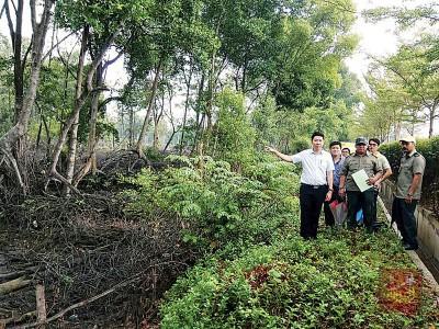 黄思敏在阿都拉迪等陪同下,视察被指过度进行过度砍伐活动的红树林。