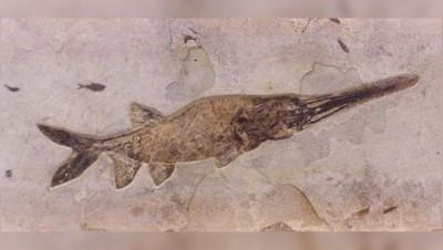 """男童意外发现罕见古代""""蜥鱼""""的化石。"""