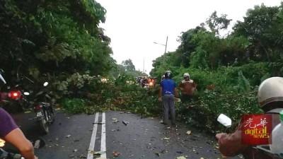 垄尾山路树倒,堵住来回方向车道,导致严重阻塞。
