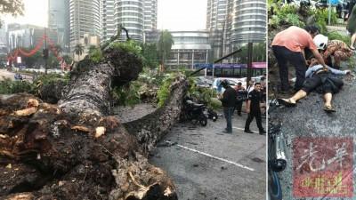 老树连根拔起,横倒在路上。摩托骑士闪避不及迎面撞上倒下的树干,与乘客一同被送院救治。