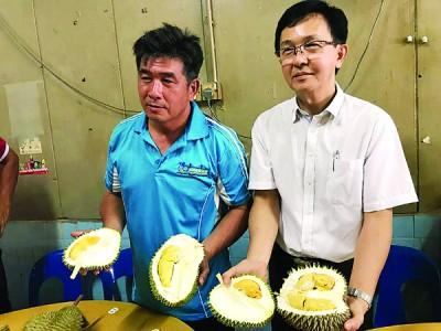 今年是榴梿丰收的季节,民众可提早享用榴梿,左起为黄志明及魏祥敬。
