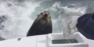 墨西哥外海的海狮跳上游艇讨鱼吃。