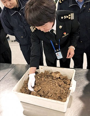海关人员检查蚁巢。