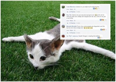 """农场猫被制成地毯,生网民(右上)留言高呼""""可耻""""。"""