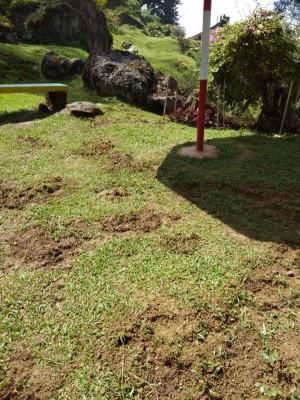 地上的泥土遭野猪破坏。