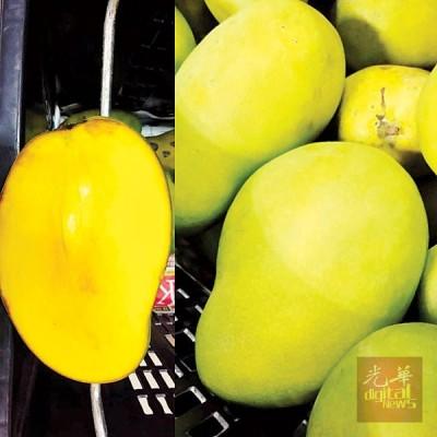 伊斯玛尝香甜芒果肉赞不绝口。右1同右3:刘伟汉以及祖基费里。