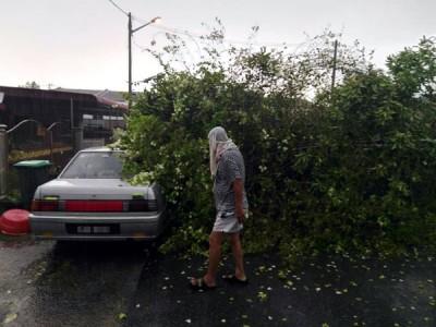 老树倒塌力压毁汽车。