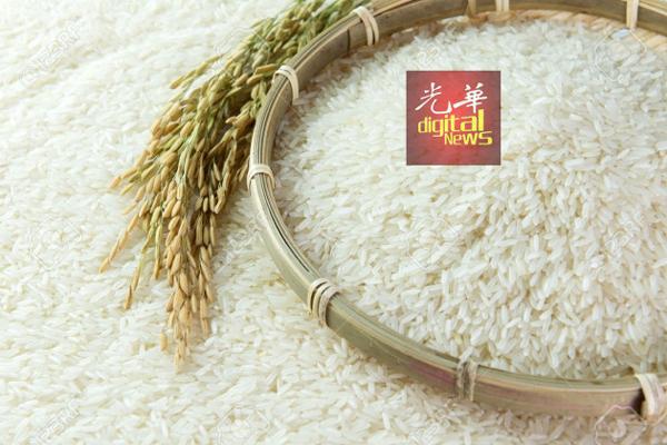 朝开放白米市场,以降和控制白米价格。