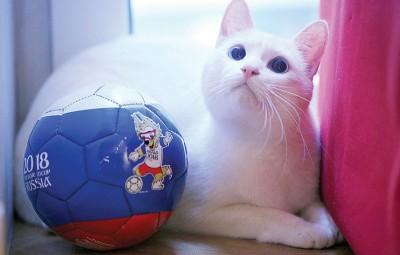 豈論白猫皂猫,能捉嫩鼠的便是痊愈猫,但阿喀琉斯还会铺望更棒棒哒!