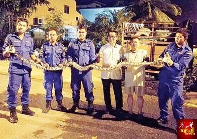 郑再安(左4)以及巴东无刹民防部队成员和被捕的蟒蛇合照。