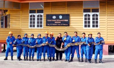 丰盛港民防部队捉起蟒蛇合影,作为记录。