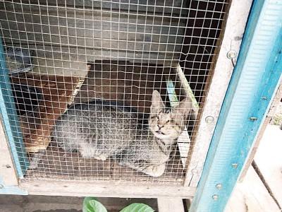 全盲的猫咪,在郑运财的照料下,与阿黄一样,有一个专属自己的空间,不再害怕外面的威胁。