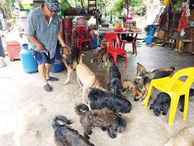 郑运财在家园收养30多只流浪或被前主人弃养的猫狗。