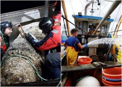 诺曼第有渔船捞起一个二战时期的炸弹。