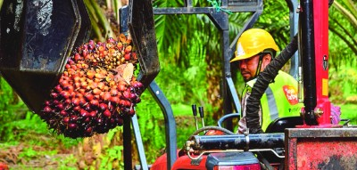 crude palm oil 02