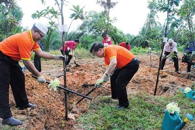 曹观友及罗查里合力将泥土参与种植金蒲桃。