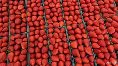 澳洲水果匿针案进一步扩充,邻国纽西兰一野连锁超市也发现了匿针的草莓。(法新社照片)